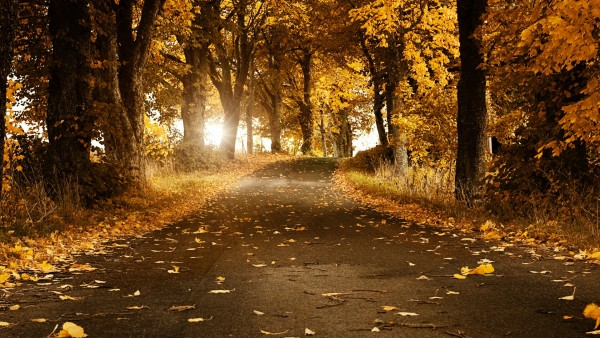 Autumn-Wallpapers